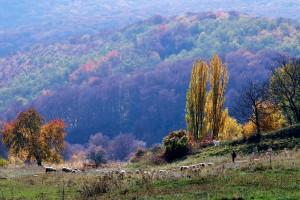 Solymosi laz_Foto-Kibedi Sandor Szekelyudvarhely